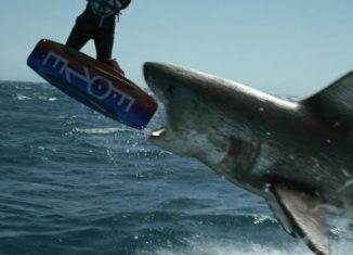El planeta de los tiburones - Mierdipelis