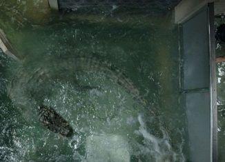 Infierno bajo el agua (Crawl) | Blog de cine